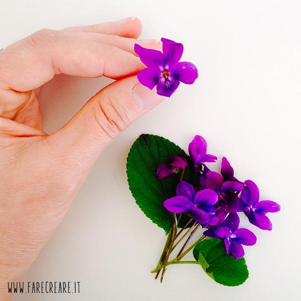 immagine stilllife di fiore violetta.